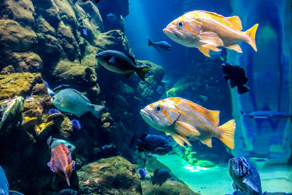 Academy of Sciences, Steinhart Aquarium, San Francisco