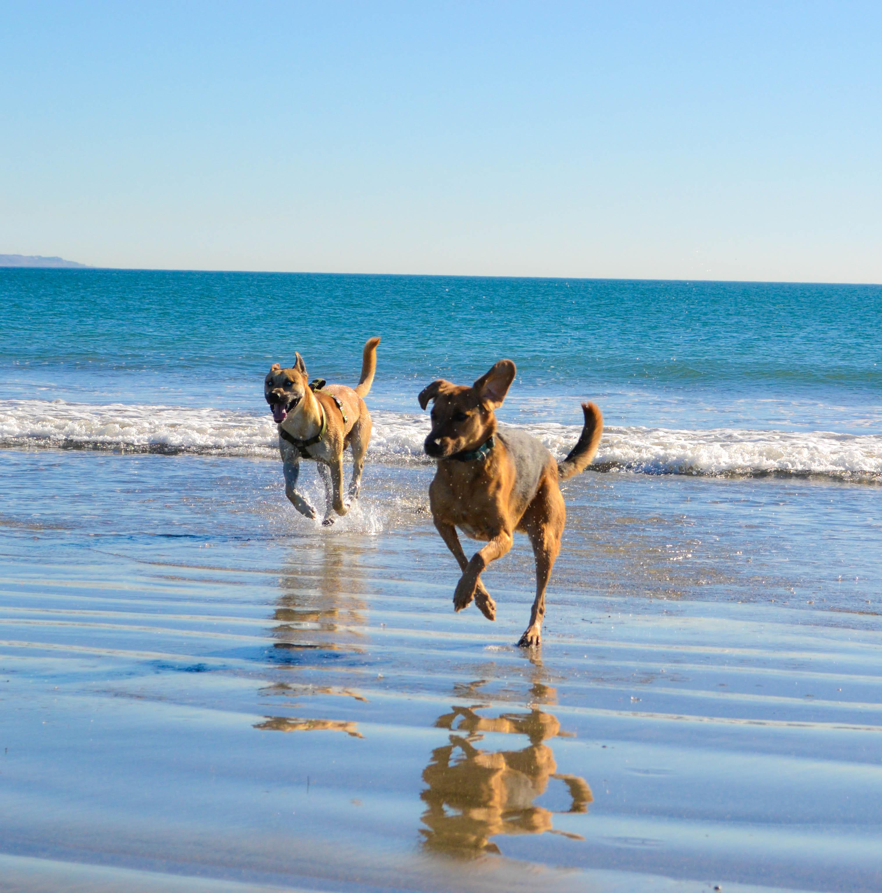 Coronado Dog beach