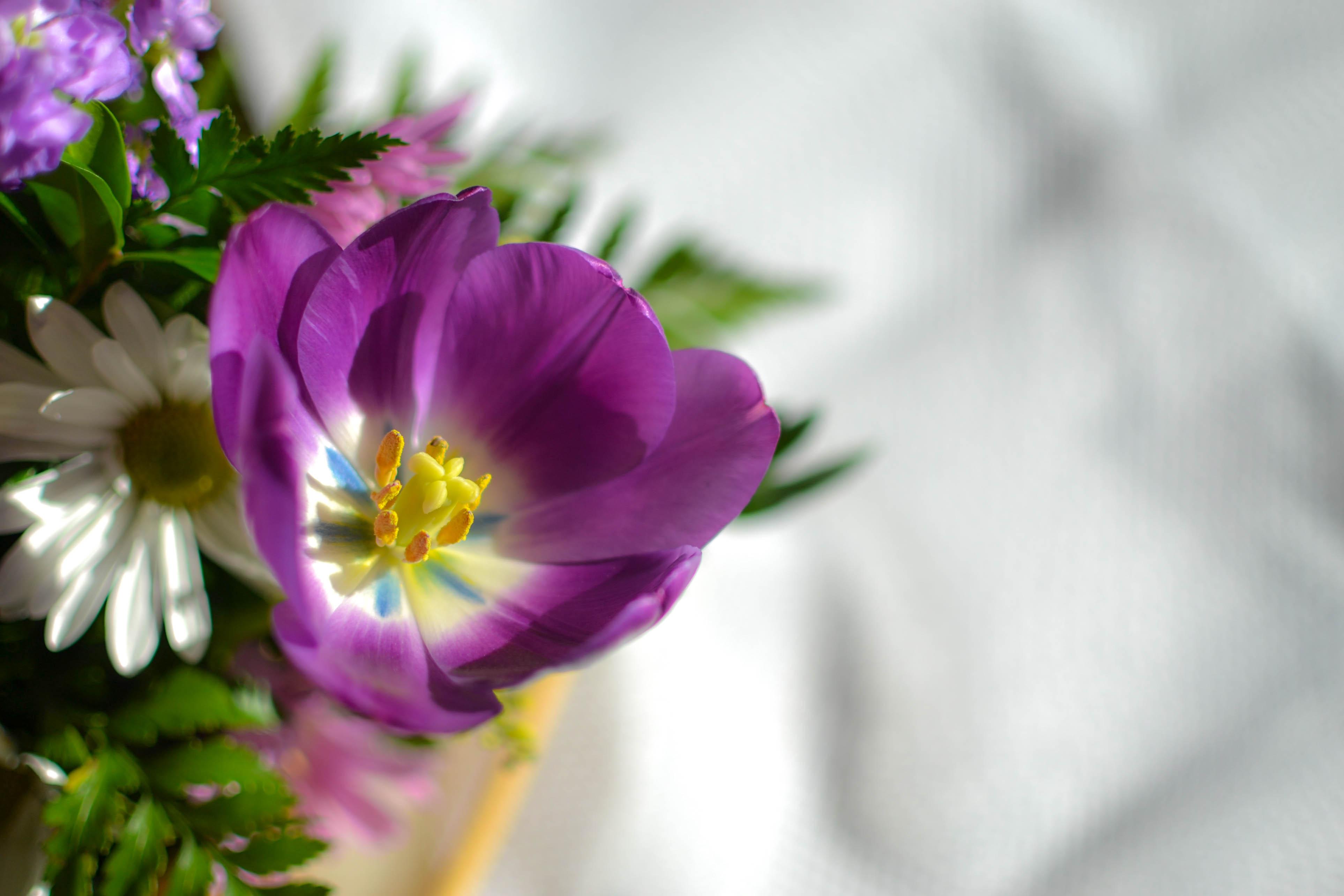 Meg's flowers 018