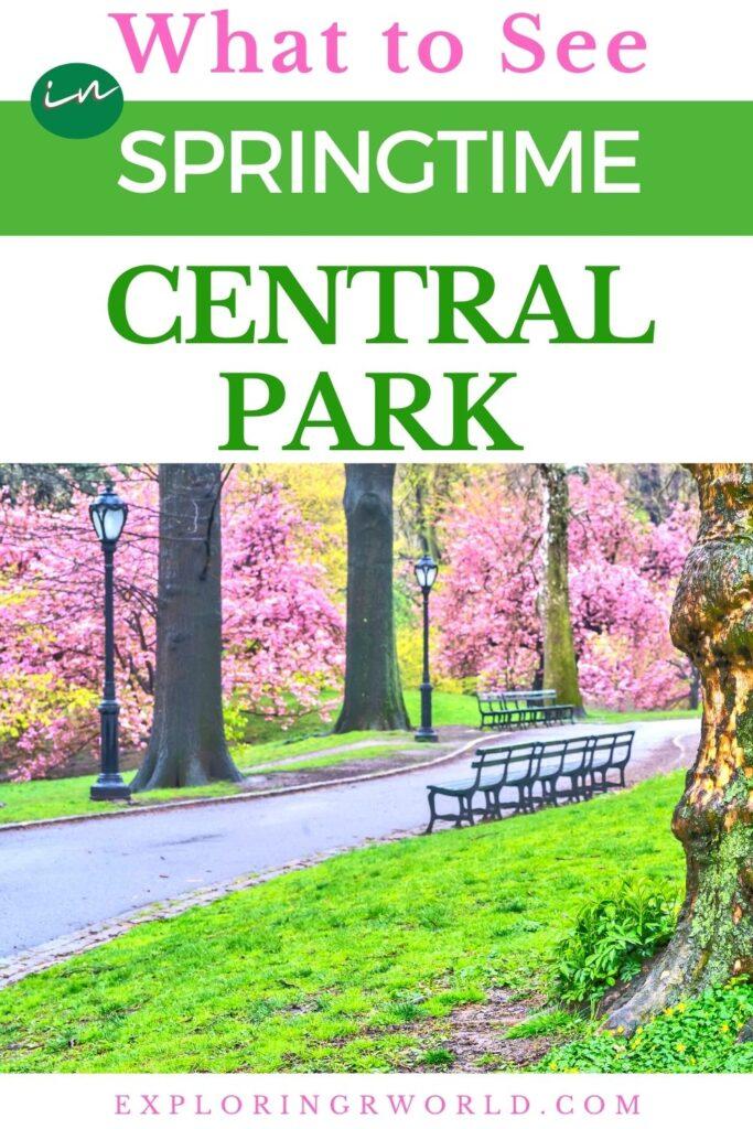 New York City Central Park in Spring