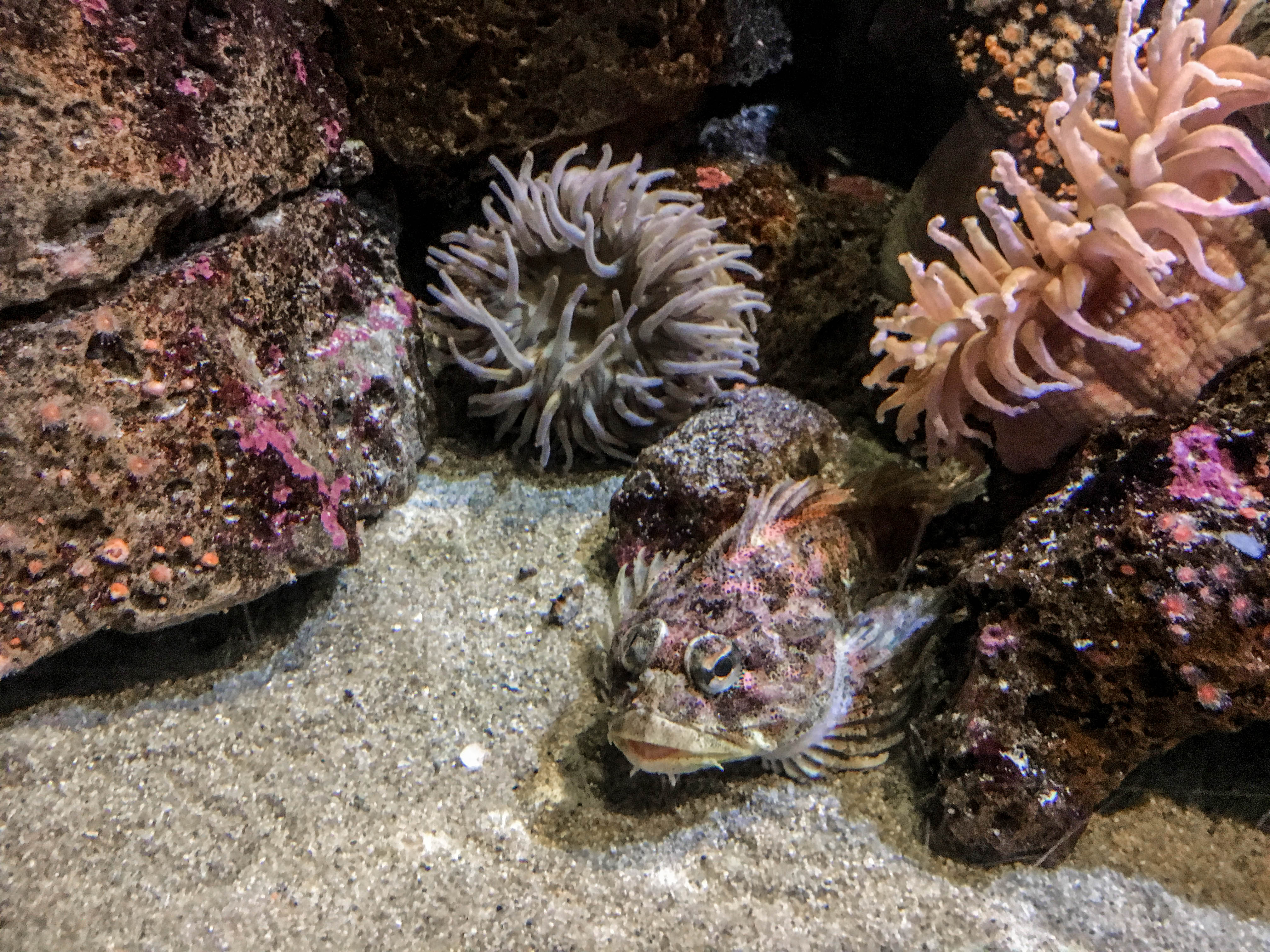 Birch Aquarium