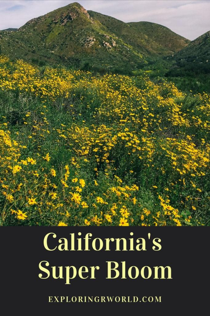 California Super Bloom - Exploringrworld.com