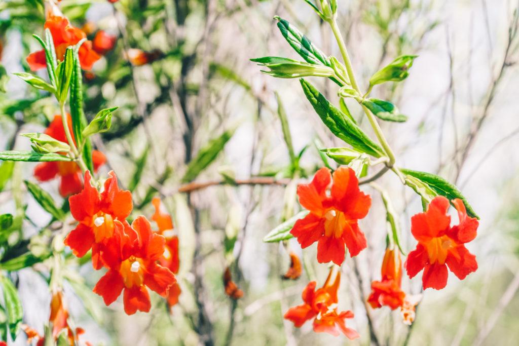 California Super Bloom San Diego