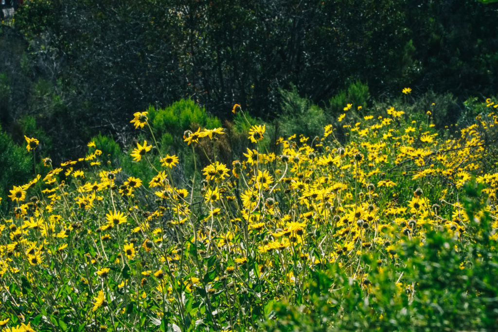 California Super Bloom San Diego