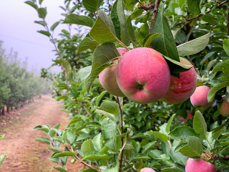 Apple Days Julian California