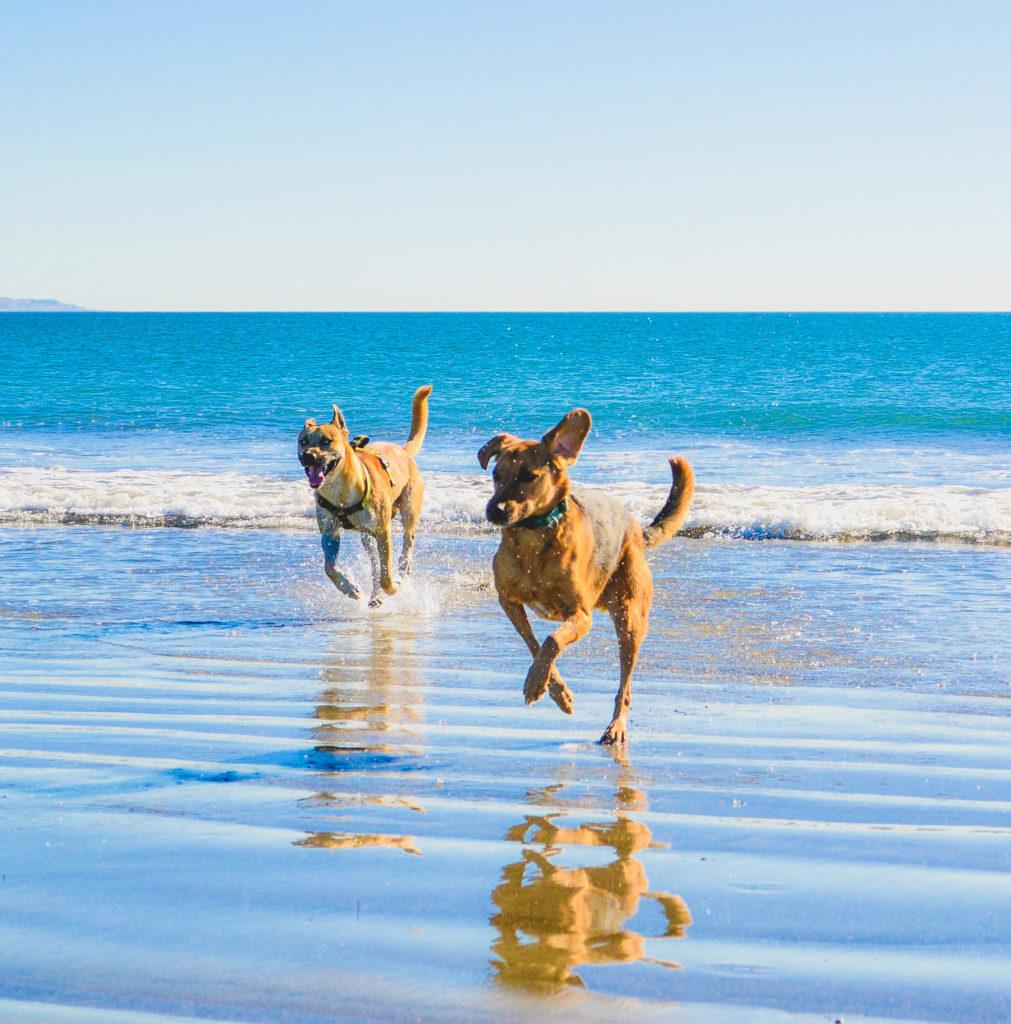 Coronado San Diego Dog Beach