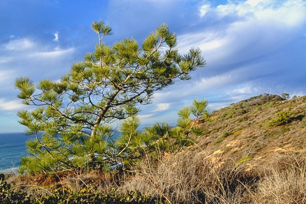 San Diego Walks - Torrey Pines