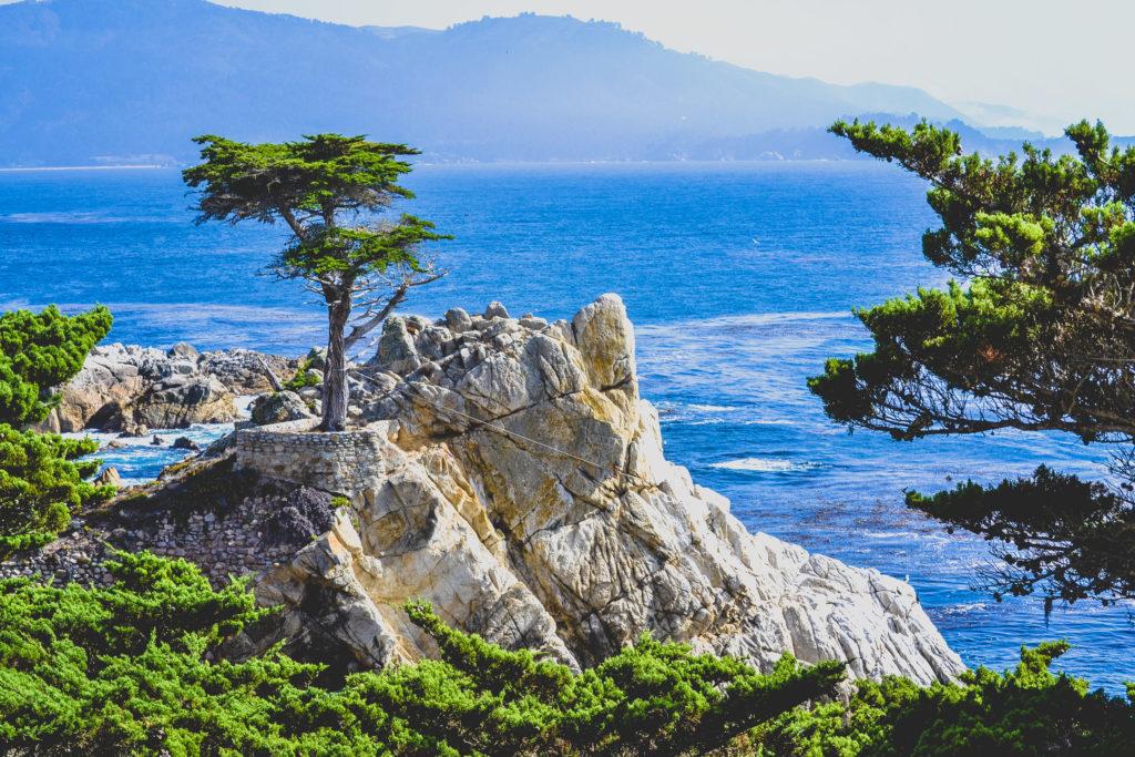 Monterey Peninsula Lone Cypress