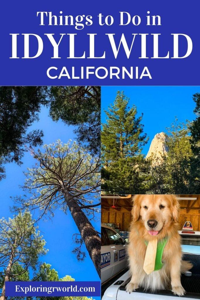 Idyllwild California Lily Rock