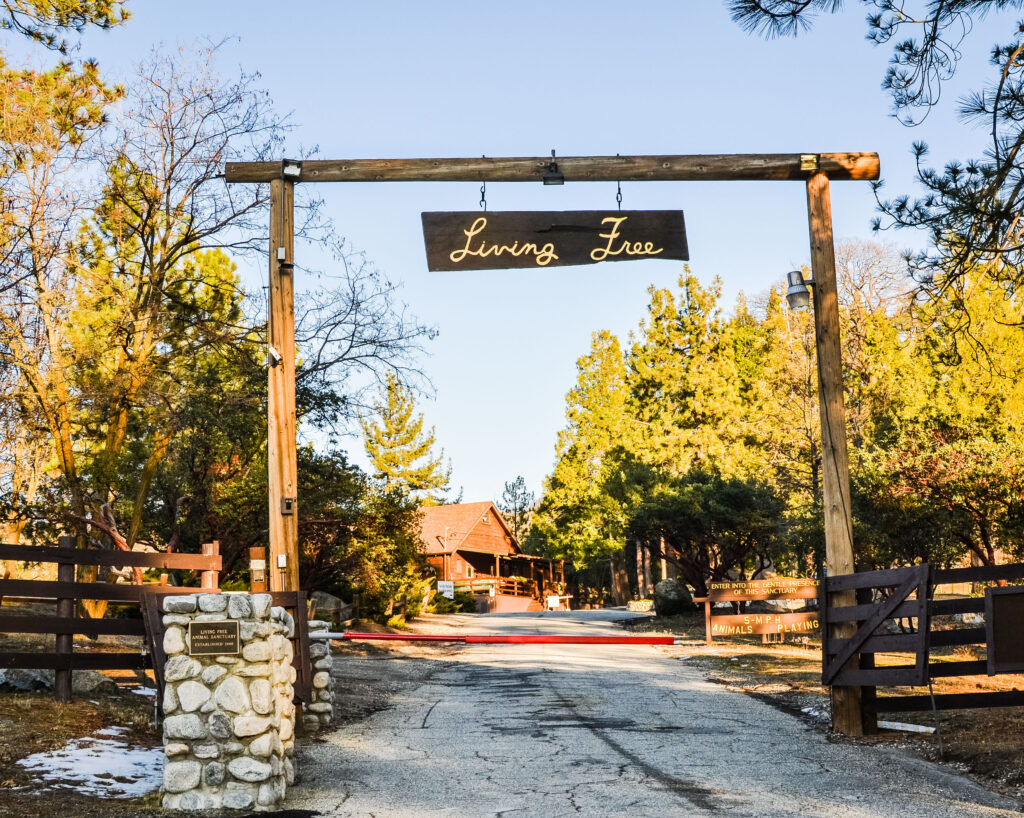 Things to Do in Idyllwild California